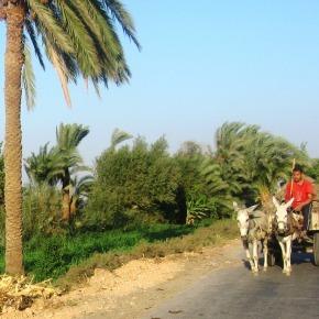 Enkele reis Mallawi