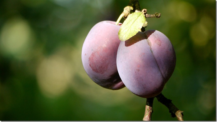 P1520674 pruimen plums (c) willemjdewit