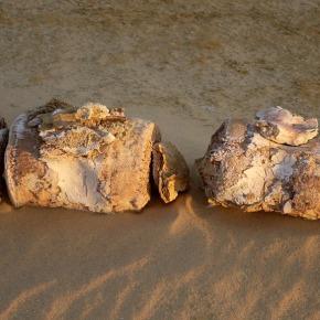 Oog in oog met walvisfossielen in het Walvissendal (Wadiel-Hitan)