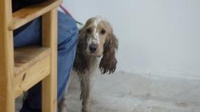 Een hond in dekapel