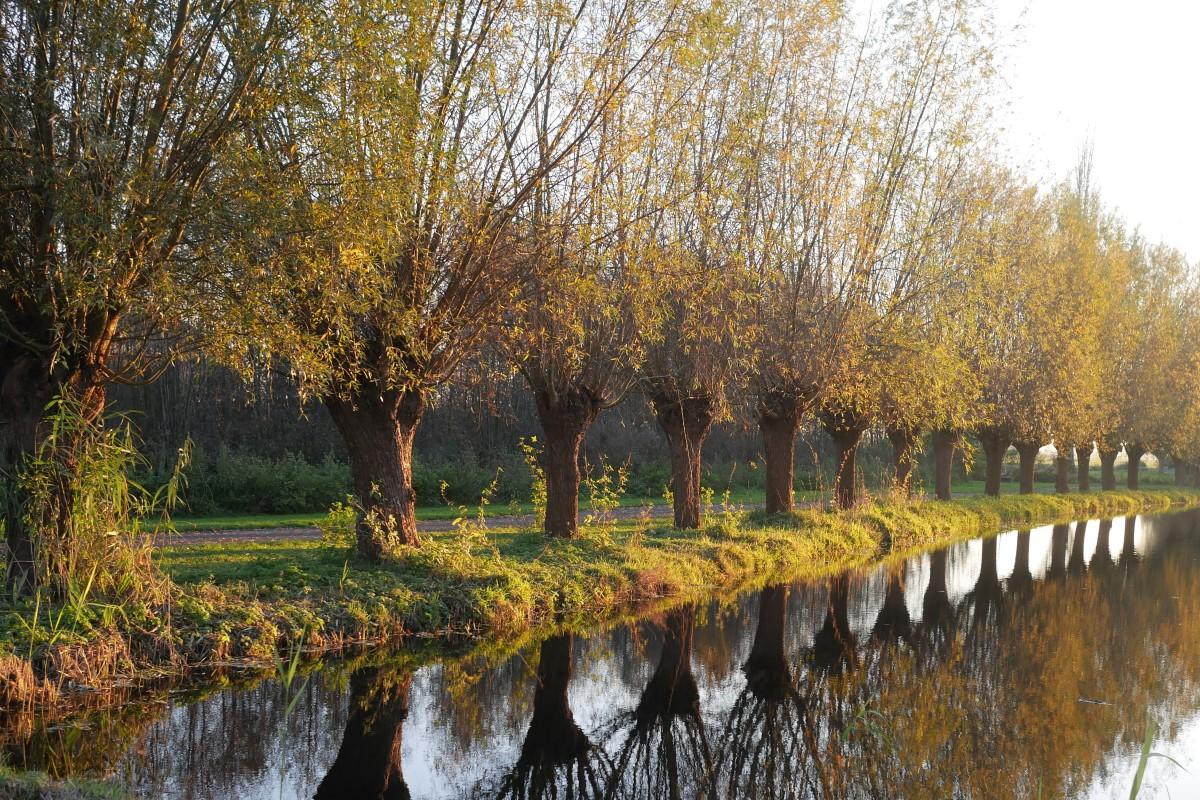 Herfst in het Groene Hart