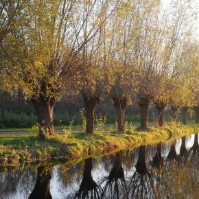 Herfst in het GroeneHart