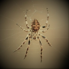 Dag 11: De spin, de vlo en de gek – een joods verhaal bij Psalm56–58