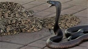 Dag 7: De slangenbezweerder van Psalm 58 tussen duivel enChristus